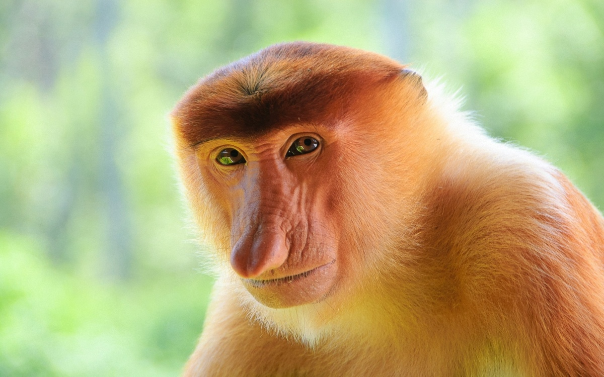 I Just Fell In Love With The Most Handsome Monkey In The World.