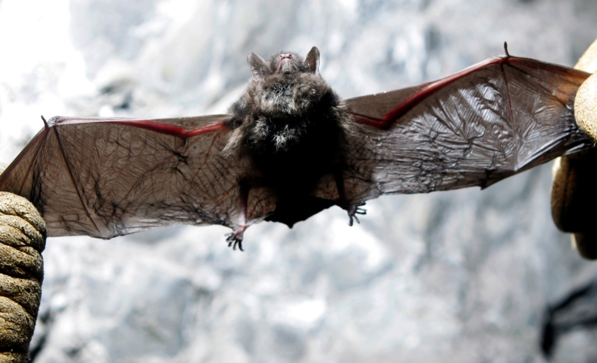Are We Happy Or Sad That White Nose Syndrome Is Killing Bats At An Alarming Rate?