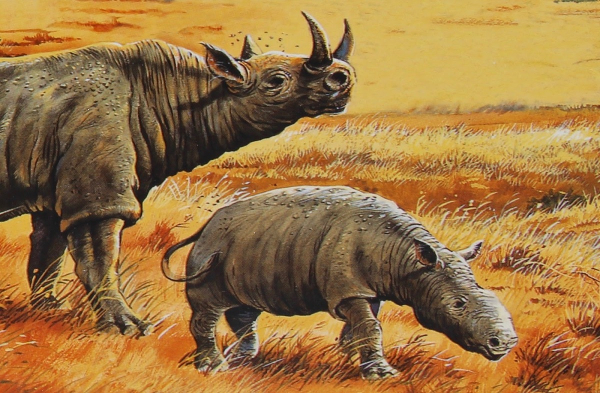 Would You Climb Into This 15-Million Year Old Rhino's Ass?